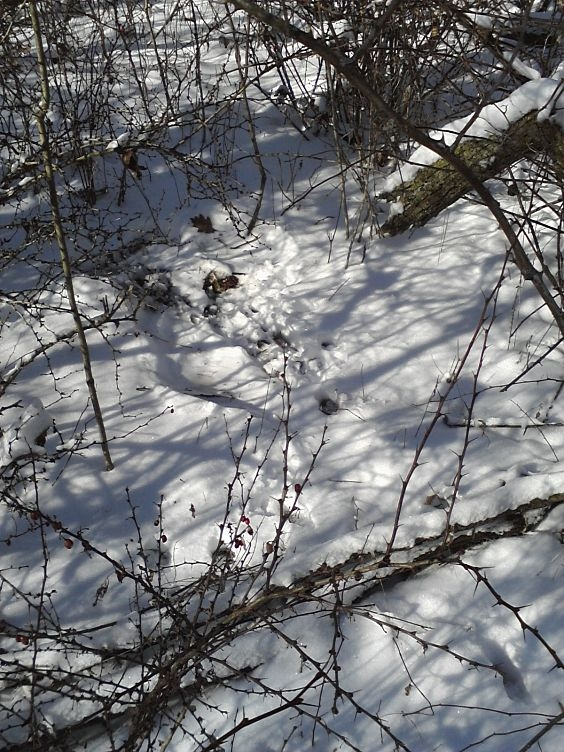deer bed in snow